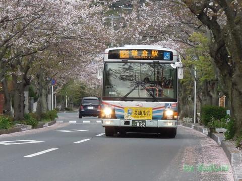 C2211 桜