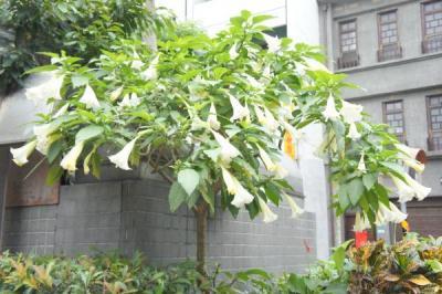 201205taiwan-45