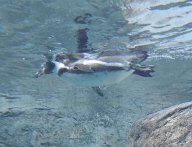 20131124旭山動物園4