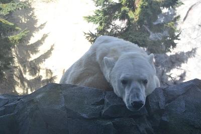 20131124旭山動物園5