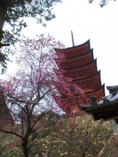 20120308miyajima2
