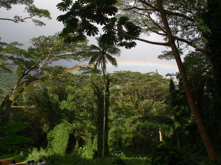 Manoa trail-IMG_5950