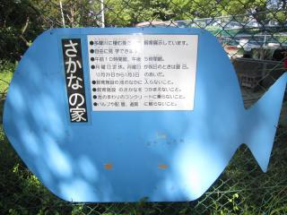 お魚ポスト_06