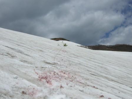 雪渓マーキング