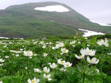 100618山頂とハクサンイチゲ