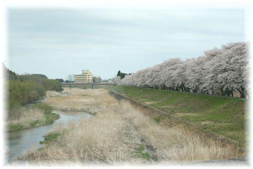 満開の桜も・・・