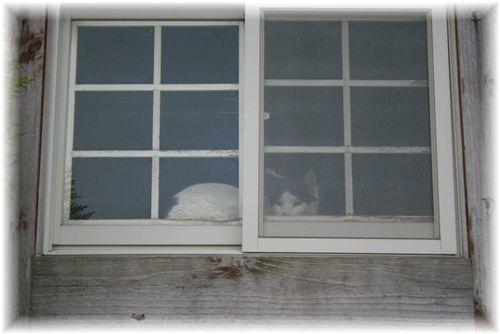 白黒猫さんだ!