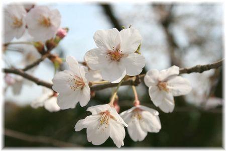 2012年お花見⑦
