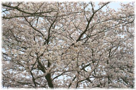 2012年お花見⑨