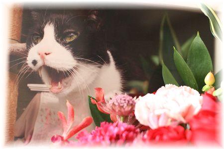 お花の中からニャ~!ナオミ
