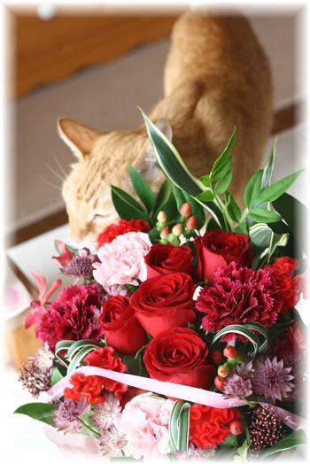 ナオミのお花とチャンちゃん