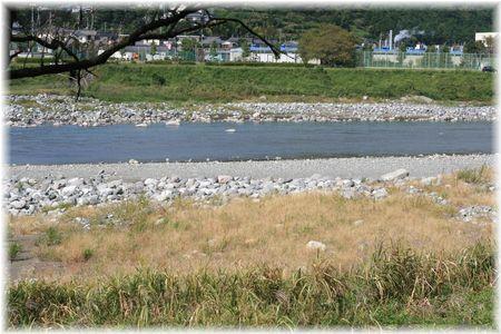 河にはヤマメが