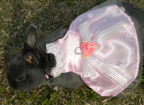 くうちゃんのドレス