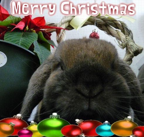 クリスマス 加工