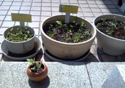 2012-04-15_13-36-11_609.jpg
