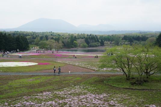 富士芝桜 展望台から