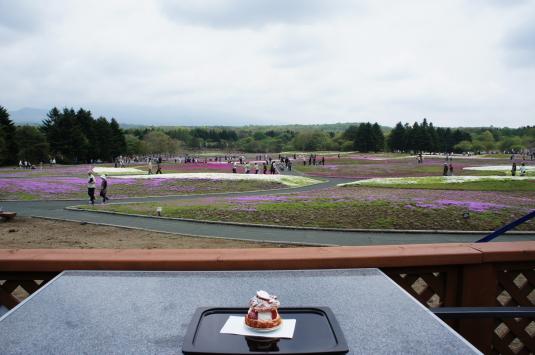 富士芝桜 桜カフェ 眺め