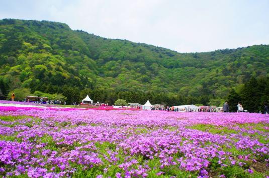富士芝桜 外観