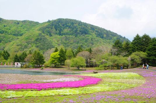 富士芝桜 湖付近