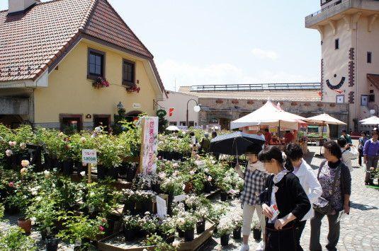 バラの花 ハイジの村 バラ販売
