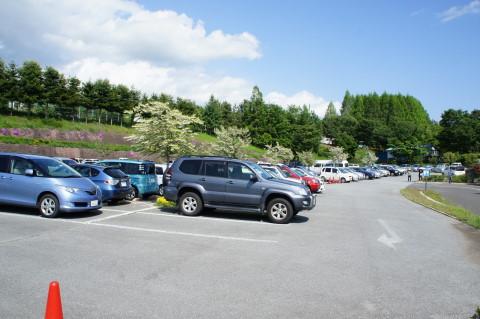 バラの花 ハイジの村 駐車場