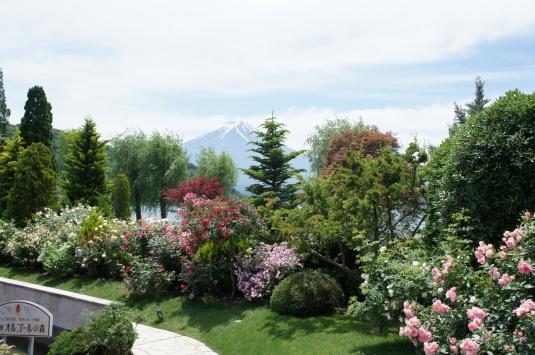 バラ オルゴールの森 富士山