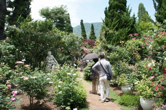 バラ オルゴールの森 裏庭