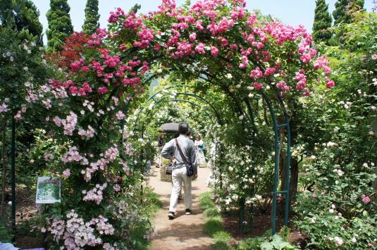 バラ オルゴールの森 裏庭アーチ