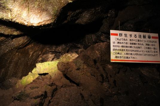 富岳風穴 ヒカリゴケ