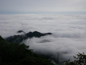 大山からの雲海20100620