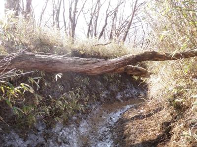 下りの尾根の倒木101223