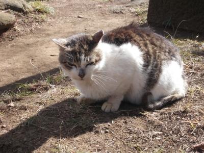 弘法山の猫110130