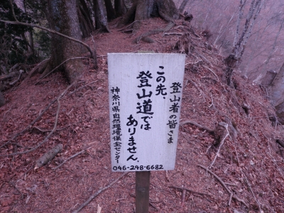 登山道にあらず110206
