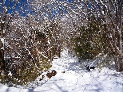 """""""ふわふわ""""の新雪に覆われた登山道"""