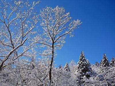 青い空に白い雪が映えます