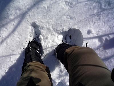 積雪はこんなカンジです