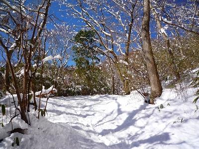 雪に被われた足柄古道