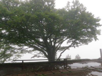 20120617雨降りの木