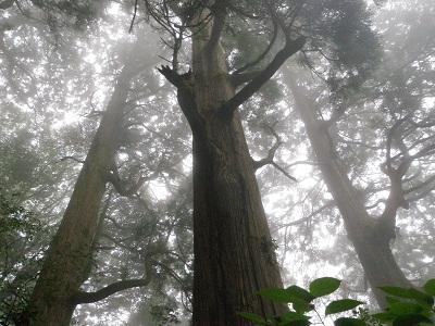 20120722筑波巨木