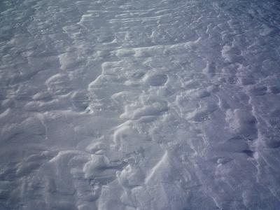 雪原の風紋