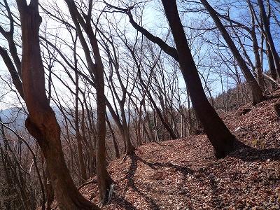 冬枯れの気持ちのよい倉岳山への登山道