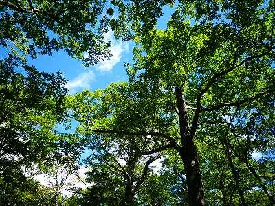 まだまだ緑鮮やかな樹木