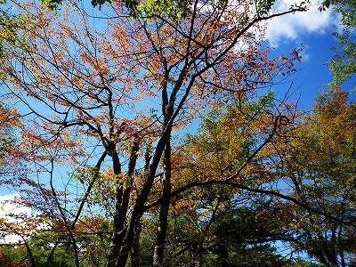 なかには少し色づいた木も