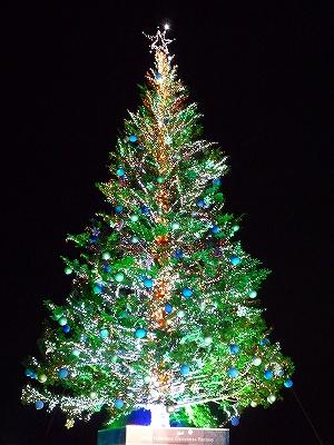 間近で眺めるクリスマスツリー