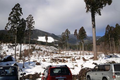 駐車場背後の伐採跡
