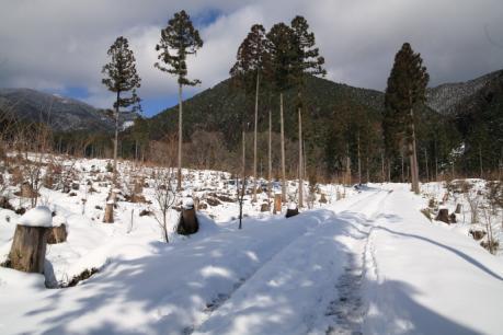 伐採跡の林道