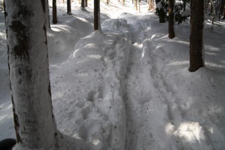 檜林の中の登山道