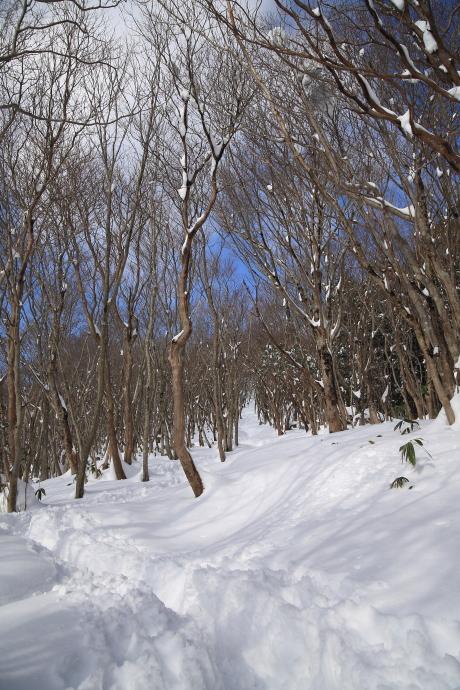 山頂下部の尾根道