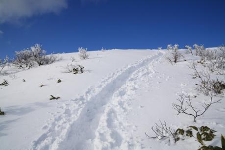 山頂下部の雪原