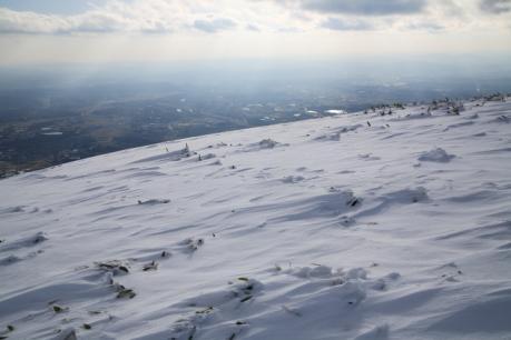 雪原に見える笹の葉